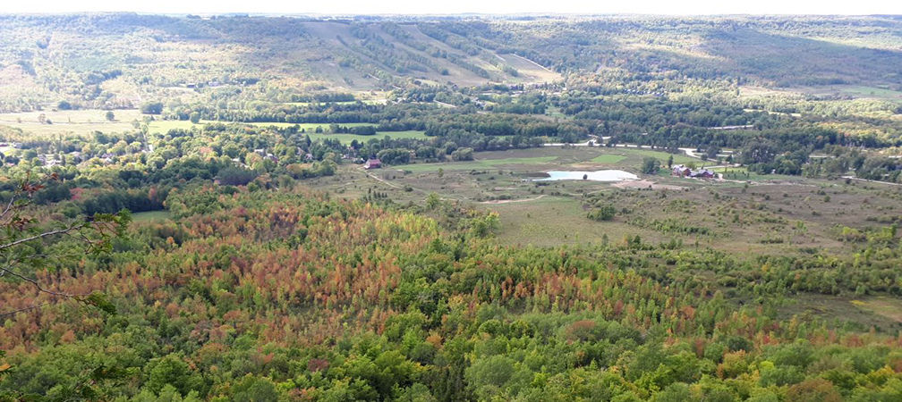 Old Baldy Conservation Area, valley, beautiful forest and wetlands