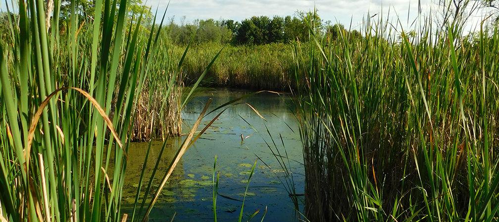 Holland Marsh Crown Land