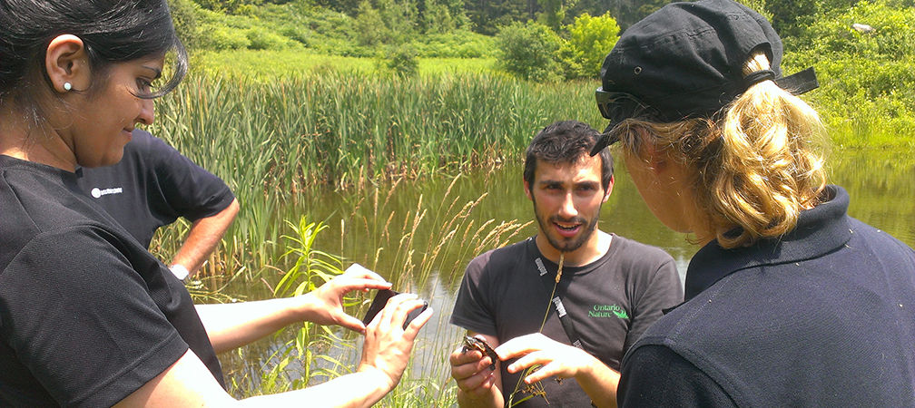 James shows a painted turtle to hikers and describes its biology