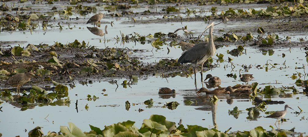 A diversity of wildlife finds refuge and habitat at Cranberry Marsh