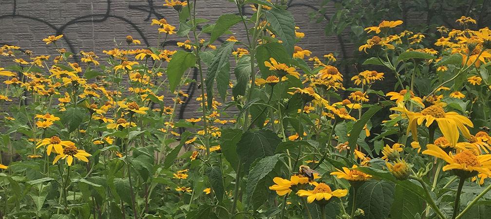 Urban pollinator garden