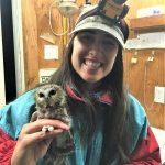 Lisa Martell banding a saw-whet owl