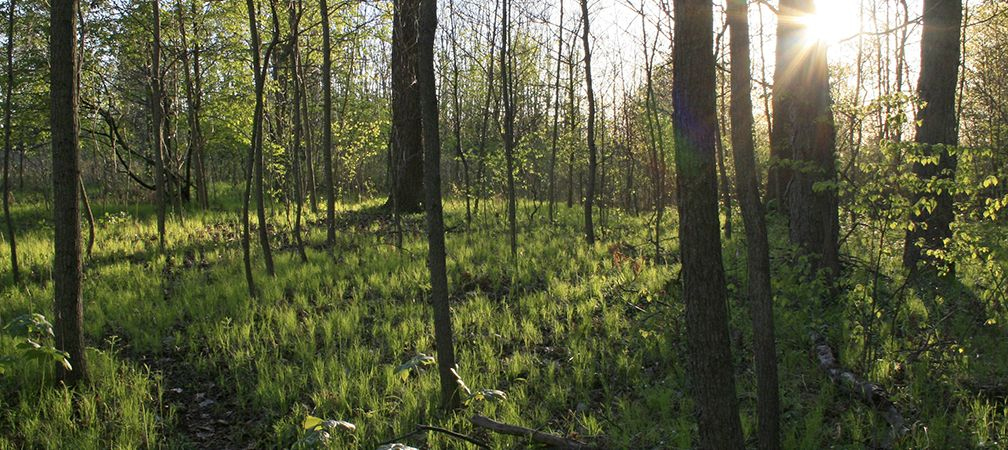 Ojibway Shores, springtime woodlands, Carolinian forest, riverside
