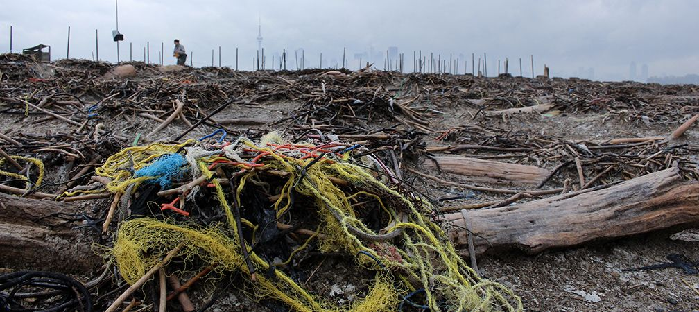 Double-crested cormorant ground nest in Toronto polluted with anthropogenic debris