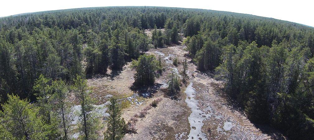 Bruce Alvar Nature Reserve, aerial image, forest, alvar, Saugeen Peninsula