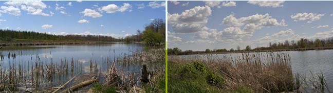 Bio-diverse hotspots where the Bypass will cross the Holland Marsh
