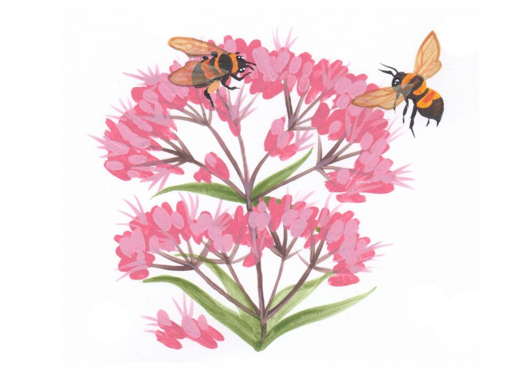 Rusty -patched bumblebee illustration