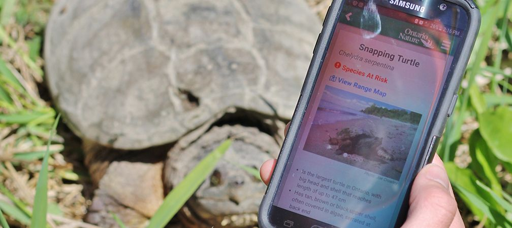 App user reporting snapping turtle to ORAA  records