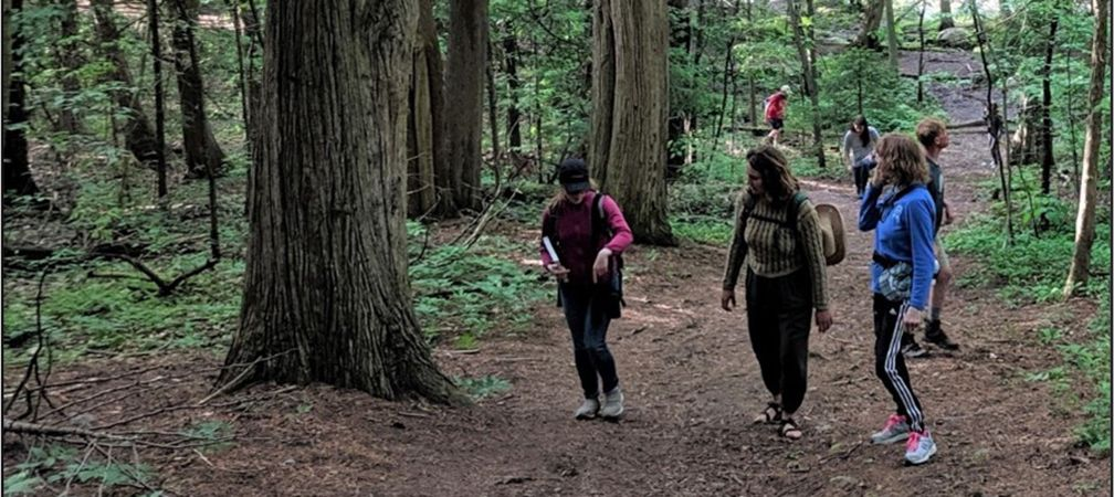 people hiking in mature forest
