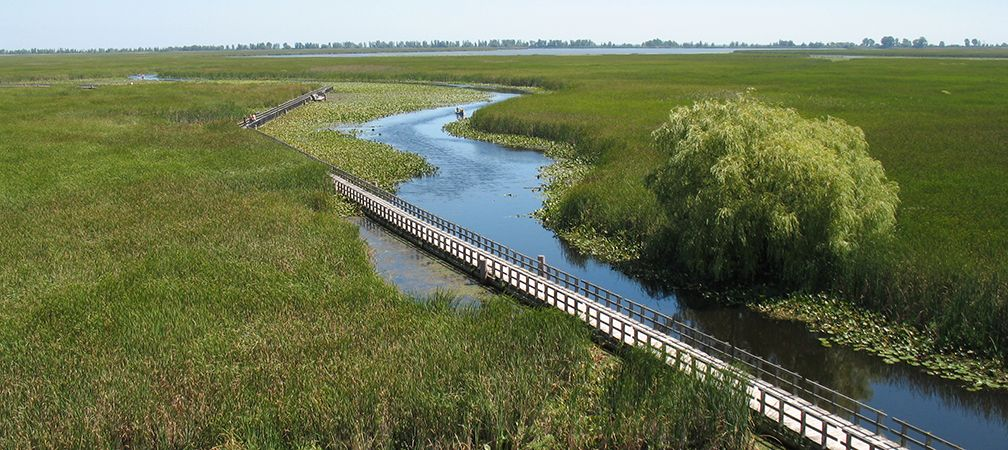 Point Pelee National Park, located on the traditional territory of the Anishinaabe, Haudenosaunee and Miami peoples